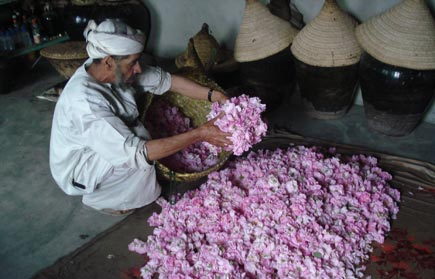 Abdullah at work in the rosewater factory